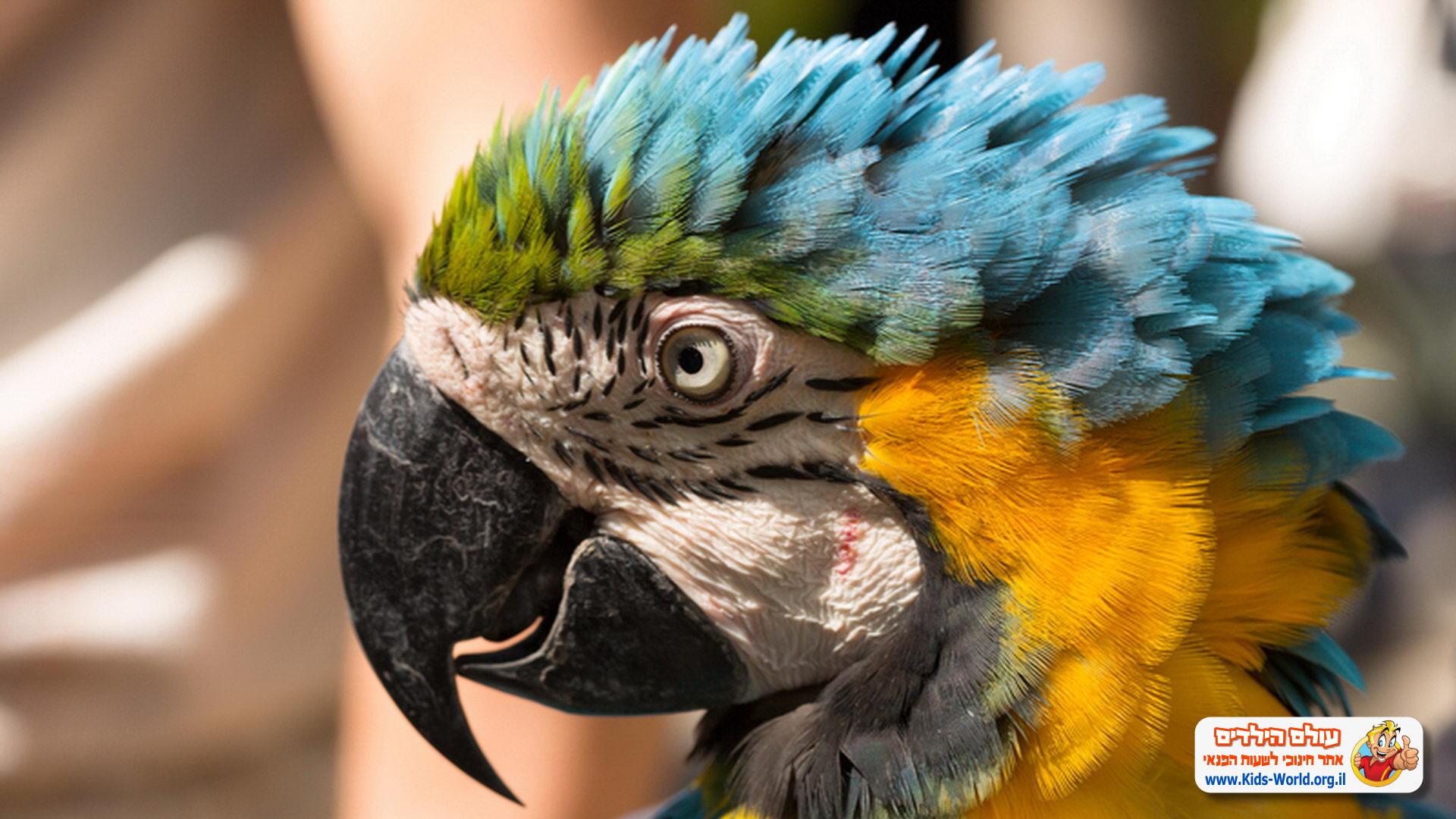 תמונות של חיות