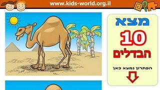 מצא את ההבדלים בין 2 הגמלים