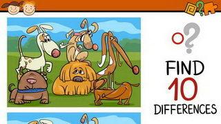 טיול הכלבים