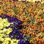 תמונות פרחים