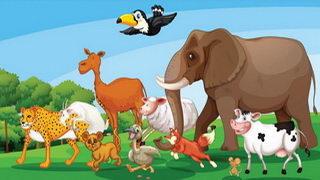 בדיחות על חיות