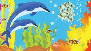 דולפין  לצביעה